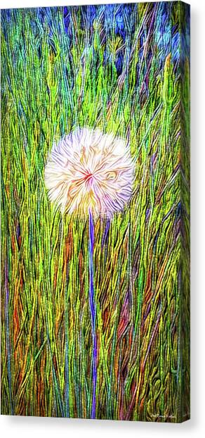Dandelion In Glory Canvas Print
