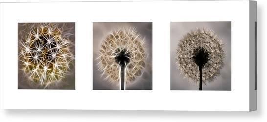 Dandelion Triptych Canvas Print