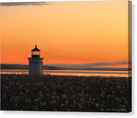 Dandelions At Sunrise Canvas Print