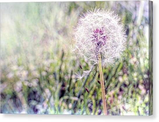 Dandilion Wishes Canvas Print