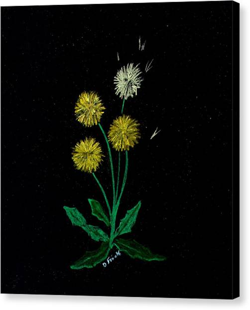 Dandy Lions Canvas Print by Diane Frick