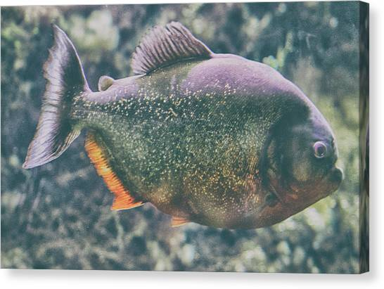 Amazon River Canvas Print - Danger Piranha On The Loose by Martin Newman