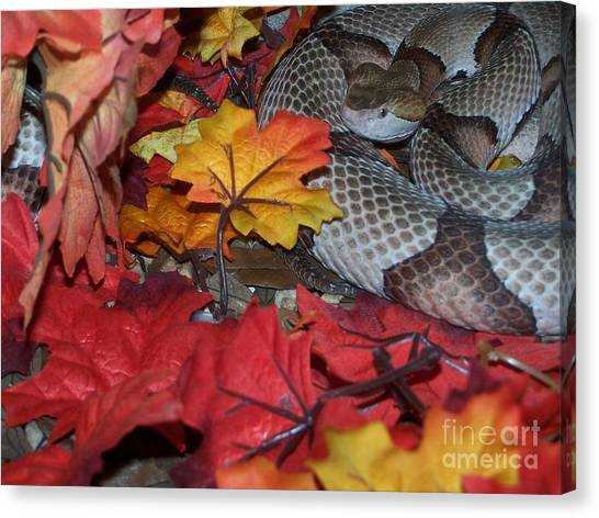 Swamp Rattlers Canvas Print - Dangerous Neighbors by Jack Norton