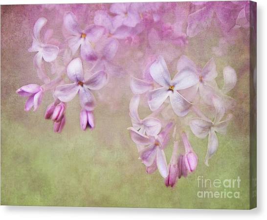 Dangle Me Lilac Canvas Print