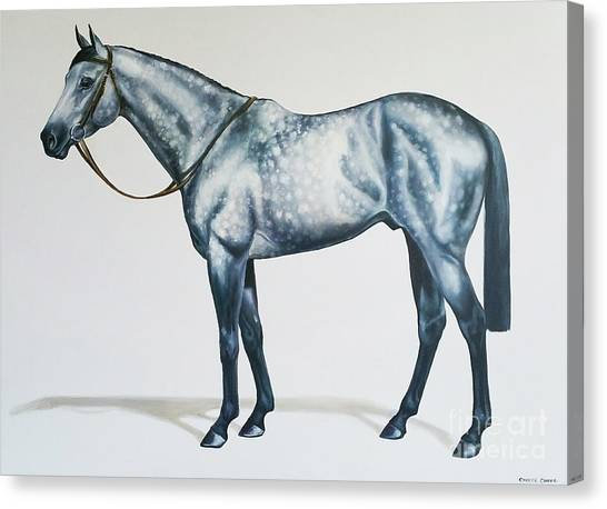 Dapple Gray Canvas Print