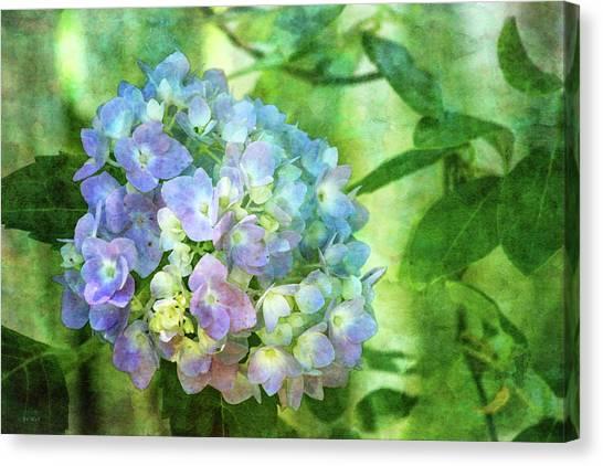 Dappled Light Hydrangea 2300 Idp_2 Canvas Print