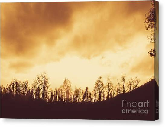 Canvas Print featuring the photograph Dark Afternoon Woodland by Jorgo Photography - Wall Art Gallery