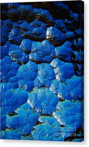 Dark Blue Canvas Print by Hideaki Sakurai