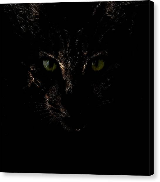 Canvas Print featuring the photograph Dark Knight by Helga Novelli