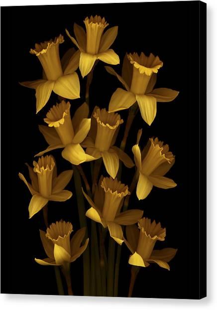 Daffodils Canvas Print - Dark Daffodils by Marsha Tudor