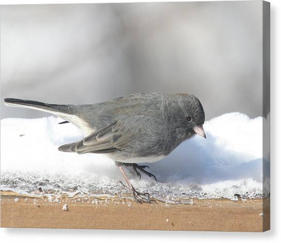 Dark Eyed Junco On The Railing 3 Canvas Print by Laurie With