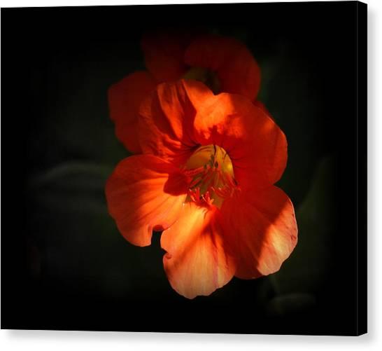 Canvas Print featuring the photograph Dark Flower by AJ Schibig