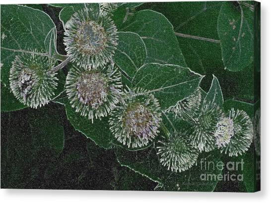 Dark Thistles Canvas Print