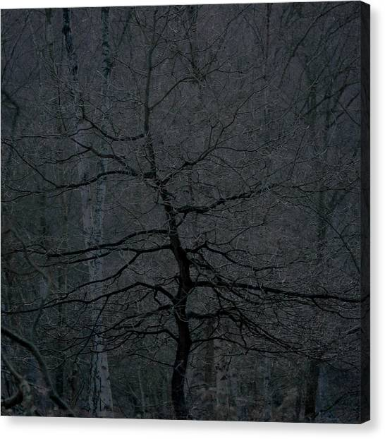 Sherwood Forest Canvas Print - Dark Tree In A Dark Wood by Chris Dale