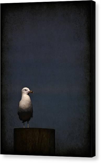 Seagull Canvas Print - Darkness Falls by Evelina Kremsdorf