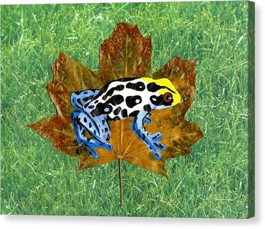 Dart Poison Frog Canvas Print