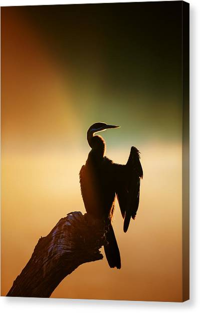 Perching Birds Canvas Print - Darter Bird With Misty Sunrise by Johan Swanepoel