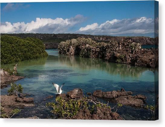 Darwin Bay     Genovesa Island      Galapagos Islands Canvas Print