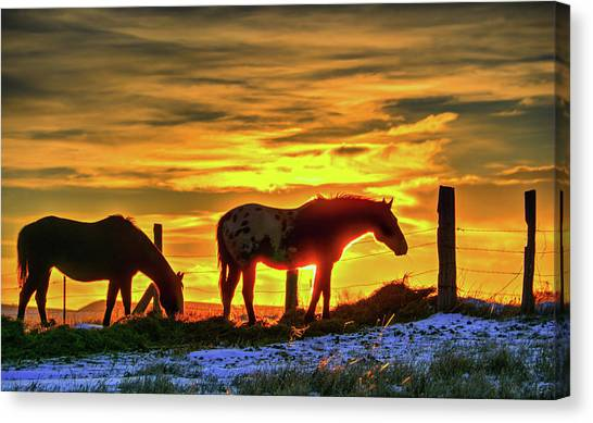 Dawn Horses Canvas Print