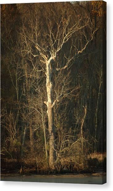Day Break Tree Canvas Print