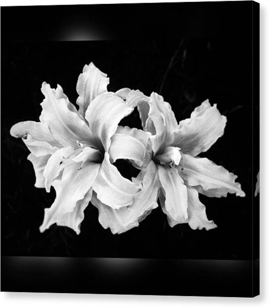 Iphoneonly Canvas Print - Day Lilies #noir #iphoneonly #iphone6 by Joan McCool