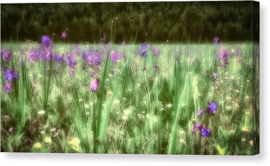 Daydreams In A Meadow Canvas Print