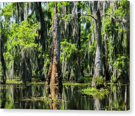 Daylight Swampmares Canvas Print