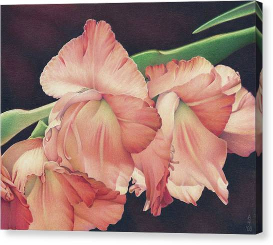 Gladiolas Canvas Print - Daylights Last Dance by Amy S Turner