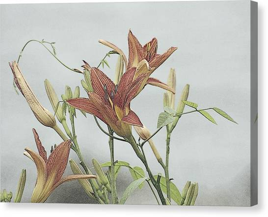 Daylilly Dreaming Canvas Print