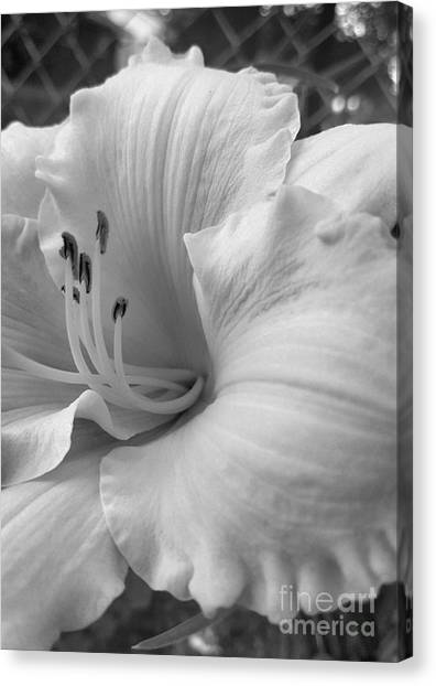 Daylily Delight In Black And White Canvas Print