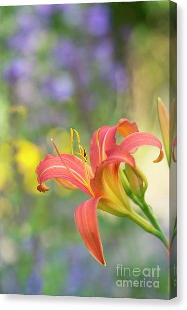 Daylily Canvas Print -  Daylily Hemerocallis Pink Prelude Flower by Tim Gainey