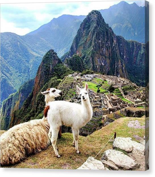 Llamas Canvas Print - De Nuestro #viaje A #peru En 2015. From by Alberto Huertas Aragoneses