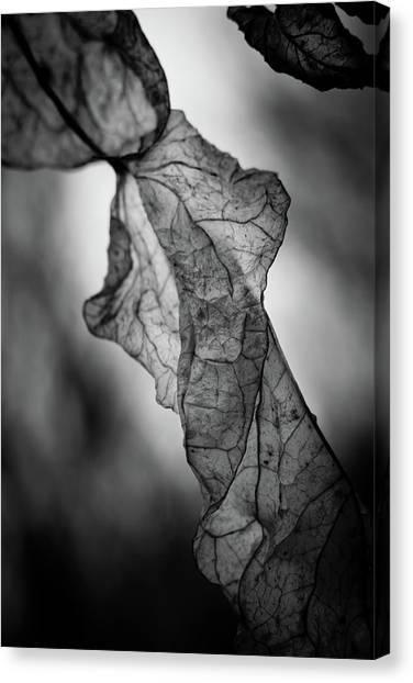 Fragile Leaf Bw Canvas Print