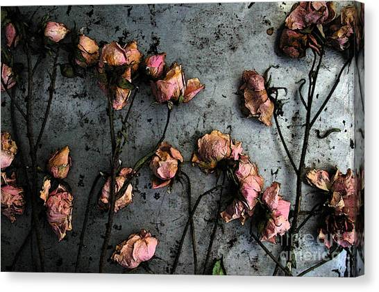 Dead Roses 5 Canvas Print