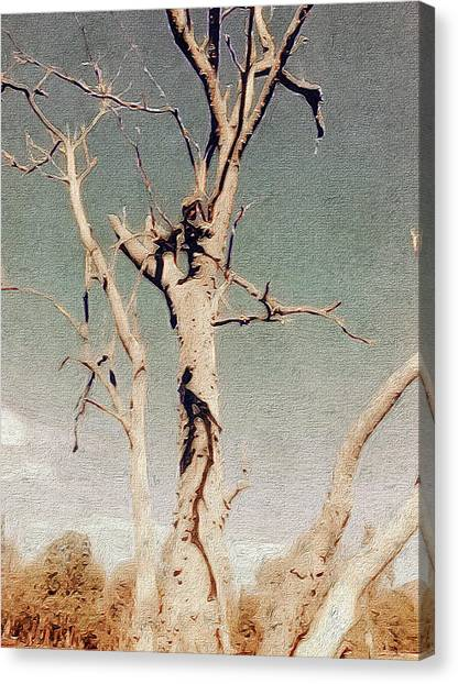 Dead Tree, Outback. Canvas Print