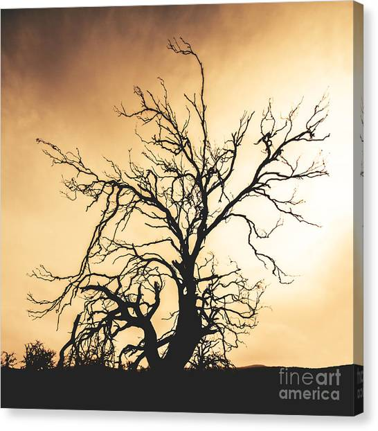 Desolation Wilderness Canvas Prints | Fine Art America