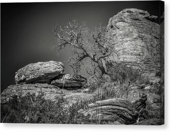 Dead Tree With Boulders Canvas Print by Joseph Smith