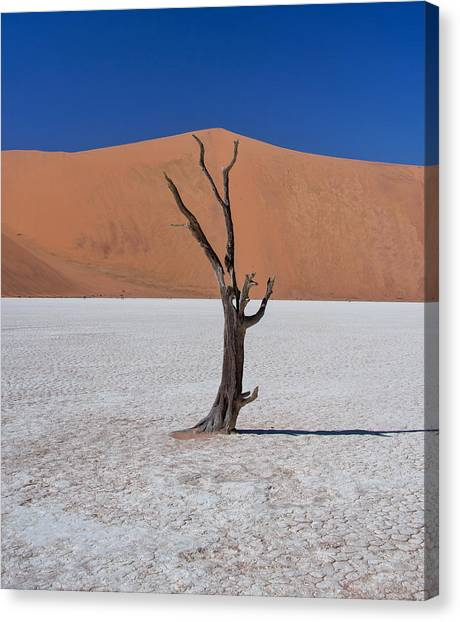 Canvas Print featuring the photograph Dead Vlei Solo by Rand