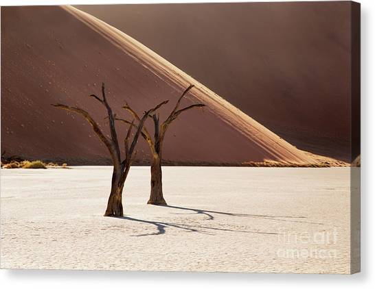 Namib Desert Canvas Print - Deadvlei Trees by Richard Garvey-Williams