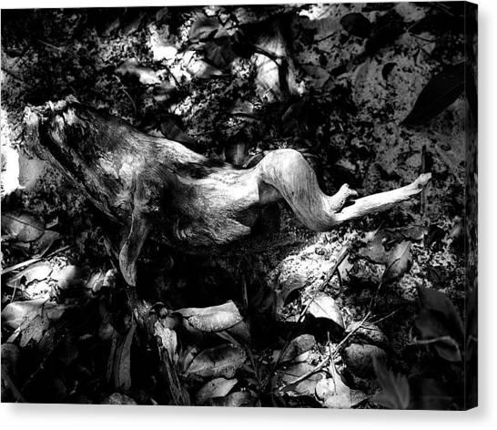 Hogs Canvas Print - Deadwood Amazon Jungle by Matt Mather