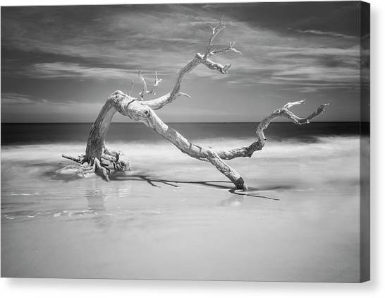 Death Of A Tree Canvas Print