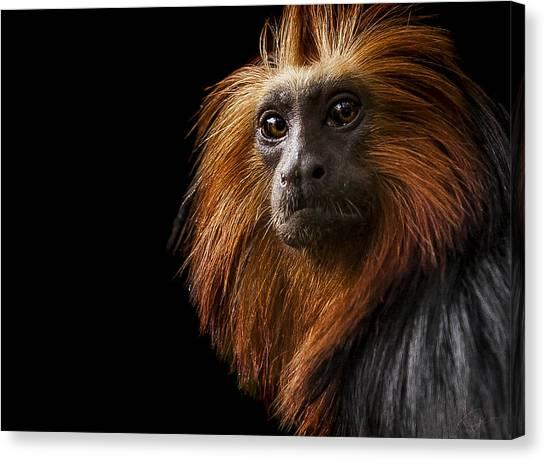 Primates Canvas Print - Debonair by Paul Neville