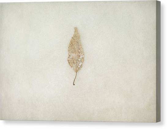 Nature Still Life Canvas Print - Decay by Scott Norris