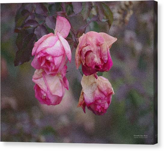 December Rose #263 Canvas Print