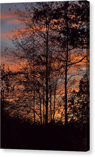 December Sunset In Frog Pond Woods Canvas Print by Maria Suhr