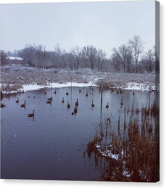 Wetlands Canvas Print - Decided To Go For A Walk In The by William Slider