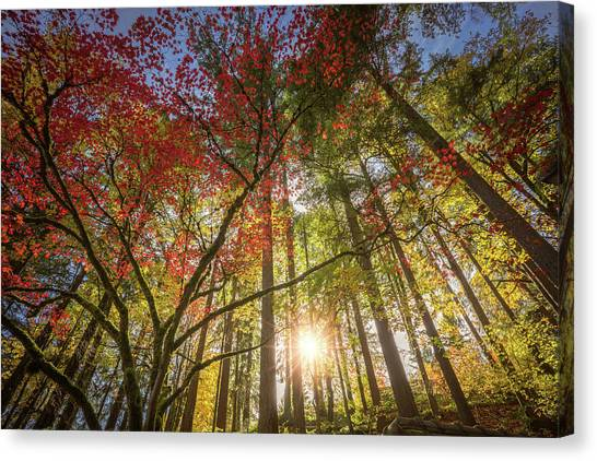Decorated By Japanese Maple Canvas Print