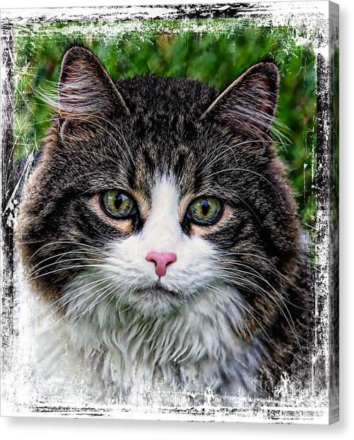 Canvas Print featuring the mixed media Decorative Maine Coon Cat A4122016 by Mas Art Studio