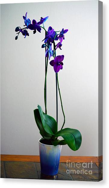Canvas Print featuring the photograph Decorative Orchid Photo A6517 by Mas Art Studio