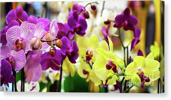 Canvas Print featuring the photograph Decorative Orchids Still Life B82418 by Mas Art Studio